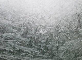 maine january snowfall (3)