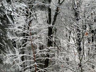 maine january snowfall (9)