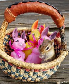Gods Creatures Easter (4)