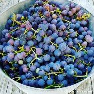 Maine Concord Grape Pie Recipe (7)