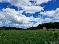 Pleasant Hill Preserve (4)